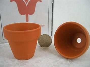 Mini Terracotta Flower Pots 57mm Amazoncouk Kitchen Home