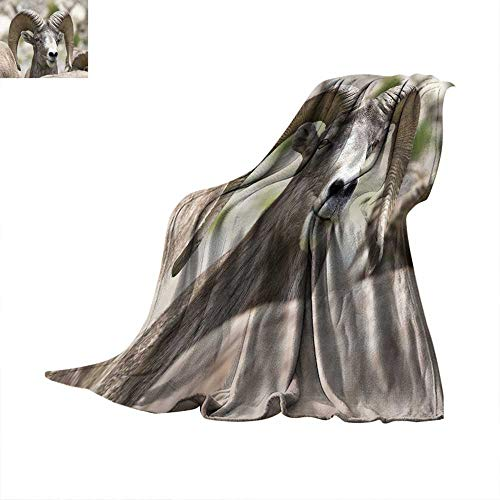 Angoueleven Bed Cover Bighorn Sheep - Stock Image Throw Blanket 60