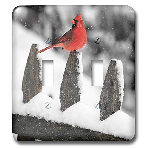 3dRose Stamp City - birds - Photograph of male Northern Cardinal on snow covered picket fence. - Light Switch Covers - double toggle switch (lsp_289751_2) Cardinals Light Switch Covers