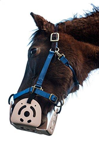Horses Muzzle - 4