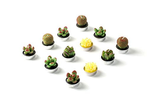Hahihi Decorative Scented Smokeless Cactus Tealight Candles, Cute Mini Succulent Plants Candles (Perfect for Home Decor/Birthday Gift/Wedding Props/House-Warming Party), Green, 12 pcs by Hahihi