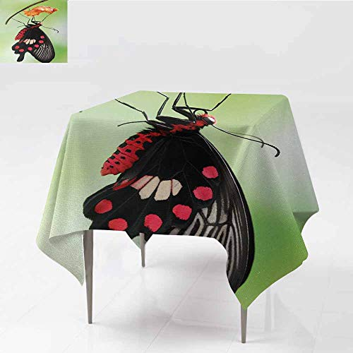 - Tablecloth for Kids/Childrens,Swallowtail Butterfly Amazing Moment Coming Out of Cocoon Chrysalis Transformation,for Square and Round Tables,60x60 Inch,Red Black Green