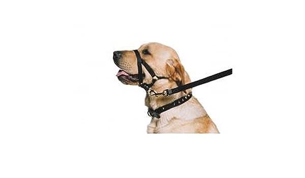 ANCOL - Arnés de Entrenamiento para Perros (Talla 5/Variado ...