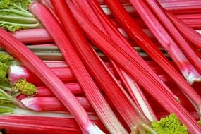 rhubarb-seeds-lider-vegetable-seeds-from-ukraine-early