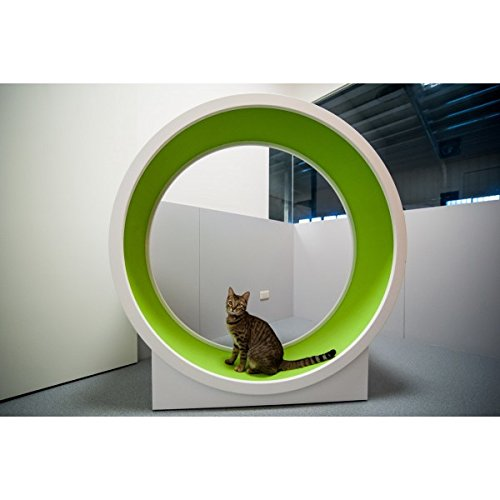 CatWheel-by-Catswall-Design-Green