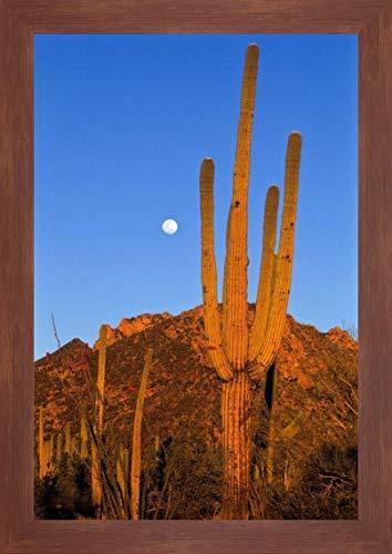 Saguaro Cactus in Desert Landscape, Sonoran Desert, Saguaro National Monument, Arizona by Konrad Wothe - 17