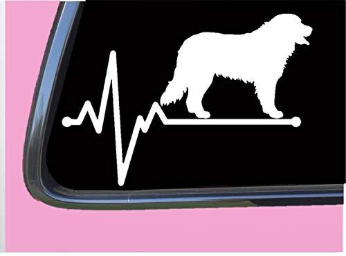 Bernese Mountain Dog Lifeline TP 245 vinyl 8