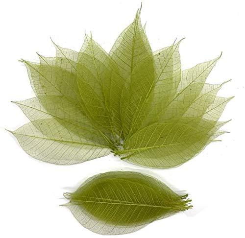 100 Pcs Olive Green Skeleton Leaves Rubber Tree Natural Scrapbook Craft Card Wedding Large Leaves
