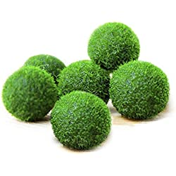 "Luffy Pet Plant for All Ages - 6 (0.5"") Nano Marimo Moss Balls - Friendly, Compact & Low Maintenance Aquatic Pet - Lifelong Friend - Ideal for Children or Adults with Busy Schedule or Little Space"