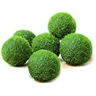 6 Nano Luffy Marimo Moss Balls – Unique Green Spherical Plants - Create Legendary Lush Landscape in Your Aquarium - Natural Habitat for Triops/Sea Monkeys - Perfect Décor - Thrive with Minimal Care