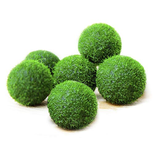 (6 Nano Luffy Marimo Moss Balls - Unique Green Spherical Plants - Create Legendary Lush Landscape in Your Aquarium - Ideal Habitat for Triops/Sea Monkeys - Perfect Décor - Thrive)