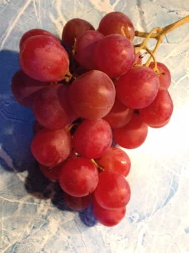 5 semillas of semillas de uva roja grande de uvas de mesa: Amazon ...