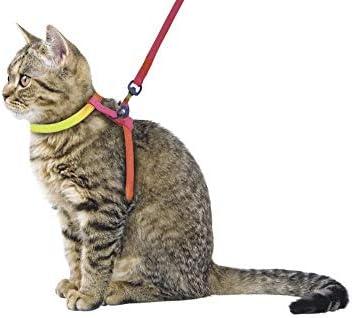 Arnés para gatos RAINBOW 10 mm/120 cm: Amazon.es: Productos para ...