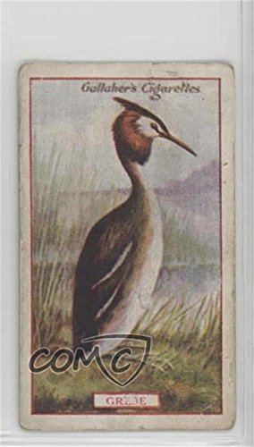 Grebe Ungraded COMC Good to VG-EX (Trading Card) 1921 Gallaher Animals & Birds of Commercial Value - Tobacco [Base] #4 from Gallaher Animals & Birds of Commercial Value