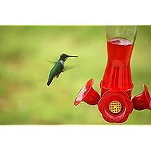 Home Comforts LAMINATED POSTER Hummingbird At A Feeder Animals Poster Print 24 x 36