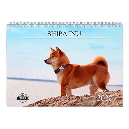 Shiba Inu 2020 Wall Calendar ()