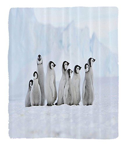 Chaoran 1 Fleece Blanket on Amazon Super Silky Soft All Season Super Plush Sea Animals Decor Collection Cute Baby Penguins now Hill Antarctica Freezing Cold Weather Image Pattern Fabric et by chaoran