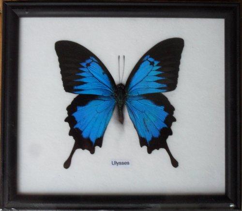 butterfly frames - 6