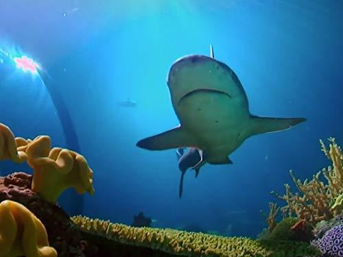 The John G. Shedd Aquarium