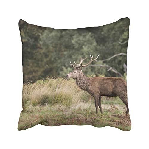 Emvency Colorful Animal Autumn Fall Landscape of Red Deer Cervus Elaphus in Forest Woodland Antler Buck Color Doe Throw Pillow Covers 20x20 Inch Decorative Cover Pillowcase Cases Case Two Side