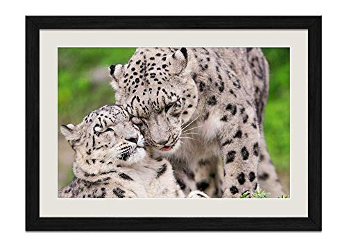 CU.RONG Snow Leopard steam Tenderness Caring Predators Wood Frame Poster Home Art Deco Picture Print Framed Painting(16x24 in Black Frame)