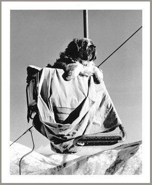 Aspen Ski Dog Bingo Vintage Photo, 8 x 10 inches