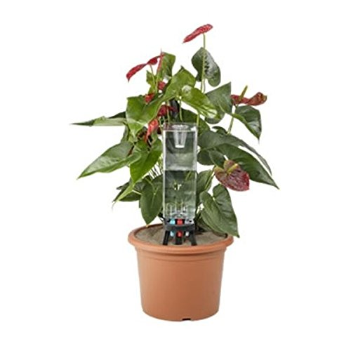 Claber 8057 Idris Potted Plants Watering System