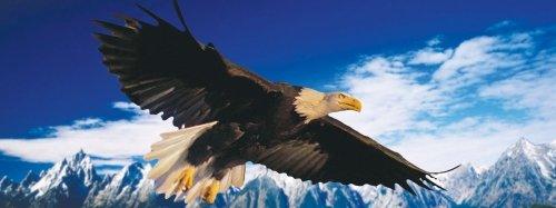 Moovie Studio- Bald Eagle Landing Bookmark