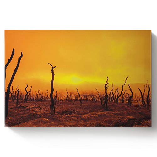 Arts Language DIY Oil Paintings Paint by Numbers Kit with Brushes for Adults/Kids Beginner a Dead Wood Forest Covered in Clouds Acrylic Paints on Canvas Wooden Framed Wall Art 16x20in