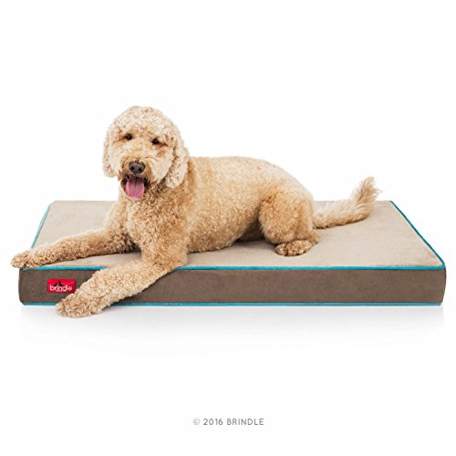 (Brindle 4 Inch Memory Foam Orthopedic Dog Bed - Removable Velour Cover with Waterproof Liner - Large Mocha Blue 46 Inch x 28 Inch)