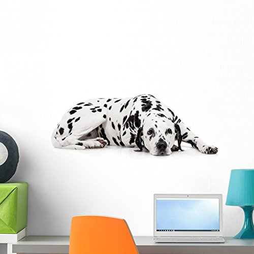 Playful Dalmatian (Beauty Dalmatian Dog White Wall Mural by Wallmonkeys Peel and Stick Graphic (24 in W x 16 in H) WM256496)
