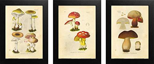 Ink Inc. Mushroom Varieties Botanical Prints Vintage Wall Art Drawing, Set of 3, 8x10, Unframed ()
