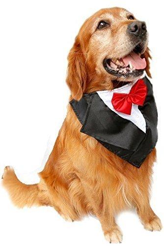 Mascota perro satén boda tuxedo lazo corbata traje disfraz ...