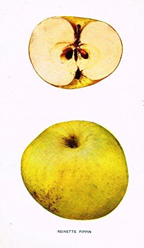 Beach's Apples of New York -