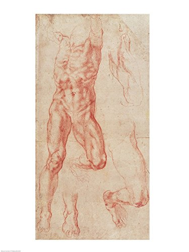 W.13r Study of a male nude, stretching upwards by Michelangelo Buonarroti Art Print, 15 x 20 inches