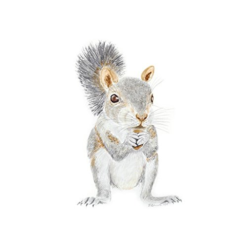 Baby Squirrel Watercolor Nursery Wall Art Decor, Woodland Nursery Art - Available In Various Sizes