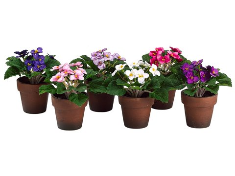 Arcadia Silk Plantation 6'' African Violet in Paper Mache Pot (1 ea/6 Colors) Assorted (Pack of 6)