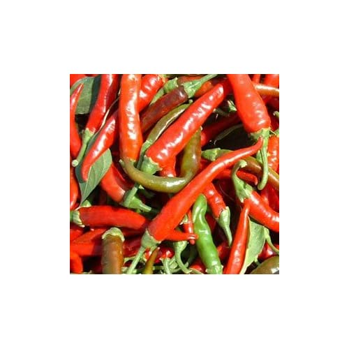 """Clovers Garden Cayenne Long Slim Pepper Plant – Two (2) Live Plants – Not Seeds –Each 4"""" to 7"""" Tall- In 3.5 Inch Pots"""