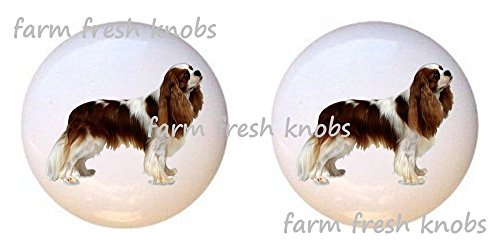 SET OF 2 KNOBS - Cavalier King Charles Spaniel Dog - Dogs - DECORATIVE Glossy CERAMIC Cupboard Cabinet PULLS Dresser Drawer KNOBS