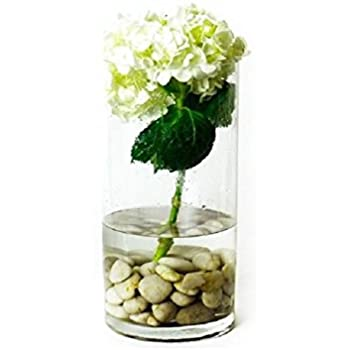 Amazon Cys Excel Glass Vase Cylinder Vase Glass Cylinder Vase