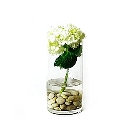 Amazon 1 x 6 x 12 cylinder vase for use with flower or 1 x 6quot x 12quot cylinder vase for use with flower or candle wedding junglespirit Gallery