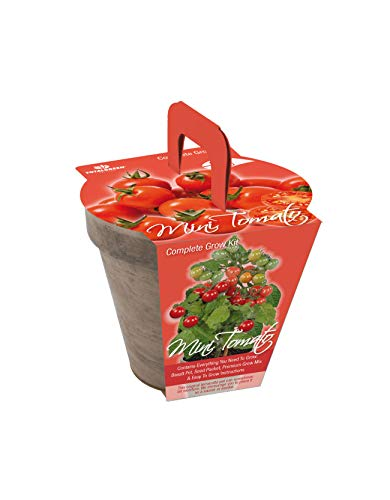TotalGreen Holland Special Mini Tomato Grow Kit | Grow Fresh Mini Tomato Seeds Indoors | Great Gift Item | Grow Your Own Mini Tomato Plants in Unique Basalt Pot | Exclusive Kit by TotalGreen Holland by TotalGreen Holland (Image #2)