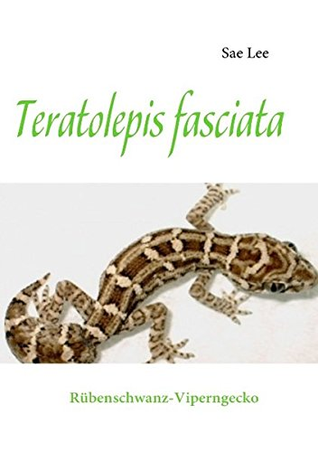 Teratolepis fasciata: Rübenschwanz-Viperngecko