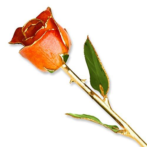 Allmygold Jewelers Orange Long Stem Dipped 24K Gold Trim Genuine Rose in Gold Gift ()