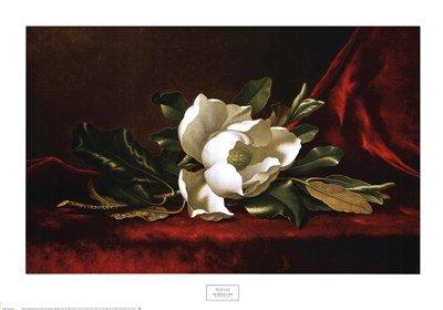 (The Magnolia Flower by Martin Johnson Heade - 36x25 Inches - Art Print)