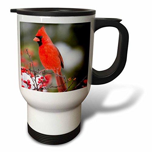 3dRose Danita Delimont - Birds - Northern Cardinal male in Common Winterberry bush in winter, Illinois - Travel Mug