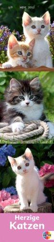 Katzen long 2012