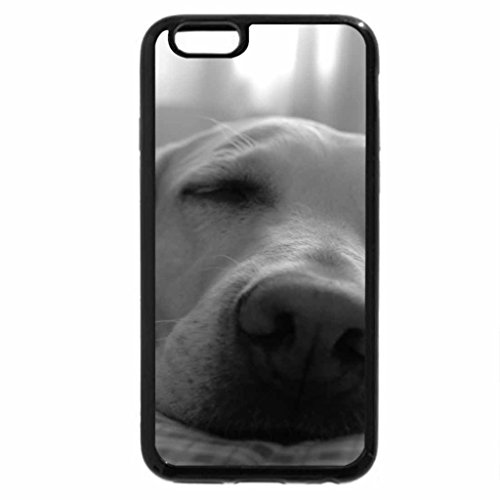 iPhone 6S Case, iPhone 6 Case (Black & White) - Dog in Sleeping