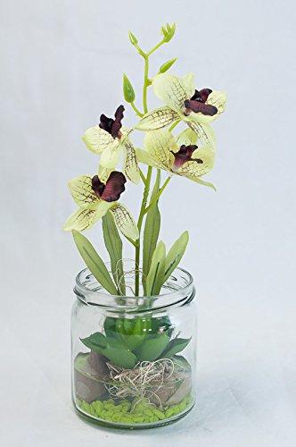 Grun Pinke Orchidee Sukkulente Im Glas Tischgesteck Tischdeko Mit