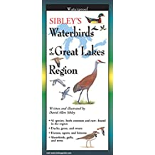 Sibley's Waterbirds of the Great Lakes R